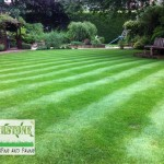 landscaping-lawns-dublin-25