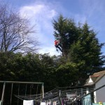 tree-topping-hedge-trimming-dublin-11