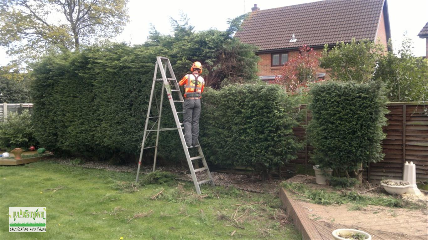 Image Result For Right Cut Tree And Garden Services